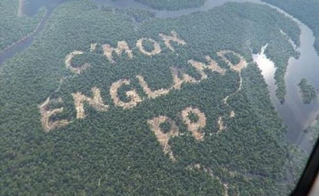 Empresa corta árvores em nome da Copa