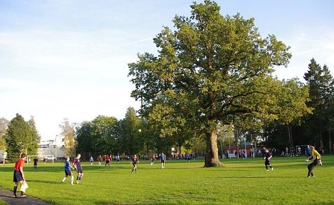 Árvore em campo é a melhor da Europa